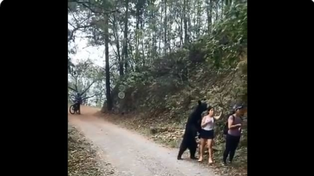 The video shows the bear standing on hind legs behind one of the hikers.(Screengrab)