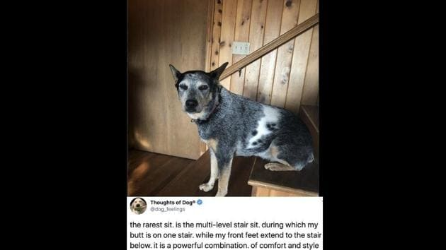 The image shows a tweet from the Thoughts of Dogs Twitter account along with a rare doggo sit.(Twitter)