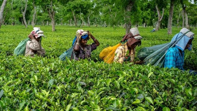 Workers carry bags of tea leaves at the Korangani Tea Estate in the Dibrugarh district of Assam, India.(Bloomberg file photo)
