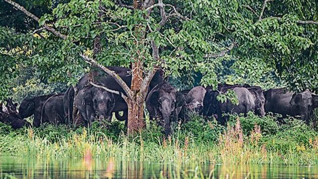 The 2002 Wildlife Conservation Strategy also recommends a 10km buffer around sanctuaries.(PTI)