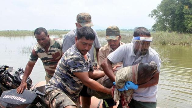 A rhino calf, that got separated from its mother, being rescued by forest personnel and veterinarians at Assam's Kaziranga National Park and Tiger Reserve.(HT Photo)