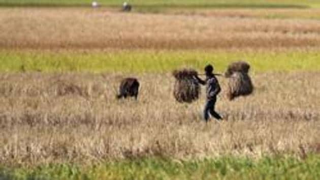 The 15 Finance Commission incentives will be linked to two recent ordinances passed by the Narendra Modi government to liberalise agricultural markets and boost private investments.(AP file photo)