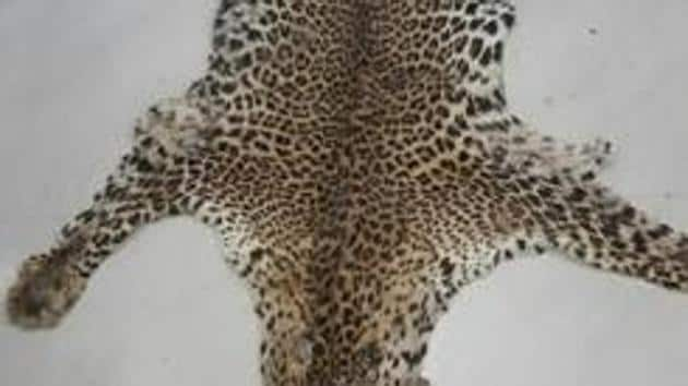 In last two months, forest department as well as special task force of Crime Branch of Odisha Police have seized five leopard skins indicating its largescale poaching.(Representative Photo)