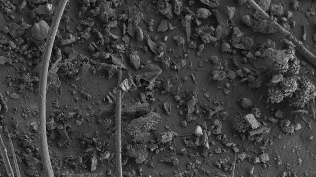 Non-coated scanning electron micrograph of a foraging Giant Asian honey bee shows the presence of fine particulate matter in the leg region on being exposed to a highly polluted site (average PM10 at 98.6ug/m3 in Bengaluru).(NCBS)