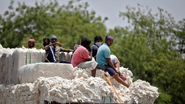 Workers sit on cotton bales being transported to a factory on a truck during an extended nationwide lockdown to slow the spreading of the coronavirus disease (Covid-19) on the outskirts of Ahmedabad.(REUTERS)