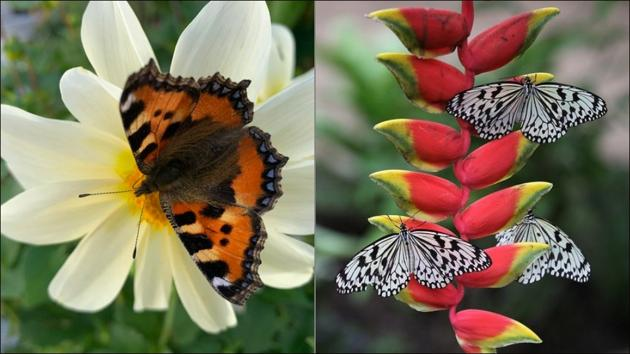 India to host its first national event on butterflies(Twitter/GardeningWell/CellyaGomes)