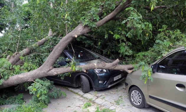 A tree toppled over cars in Chandigarh's Sector 21-B on Sunday.(Keshav Singh/HT Photo)