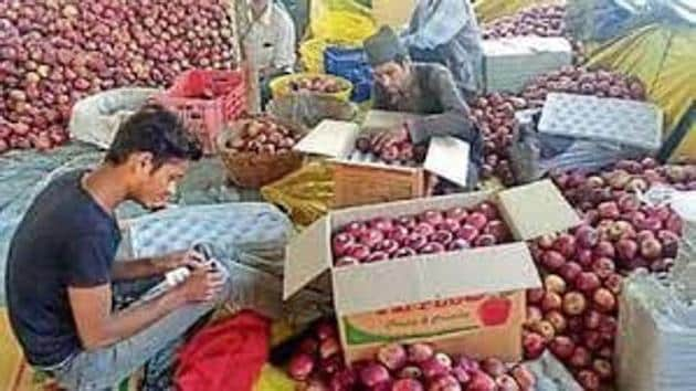 Himachal's Rs 4,500-crore apple economy sustains the livelihood of 1.65 lakh families.(HT File)
