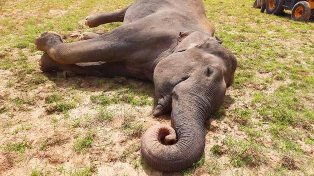 The male elephant was found dead in Khanpur range of Haridwar forest division(HT PHOTO)