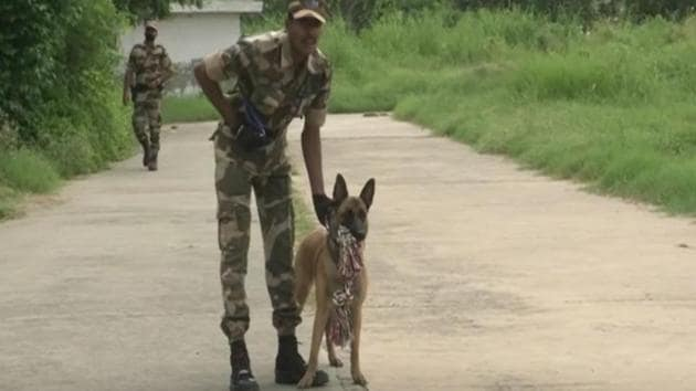 Polo, a Belgian Malinois dog with special skills has been given his first posting by the CISF.(ANI)
