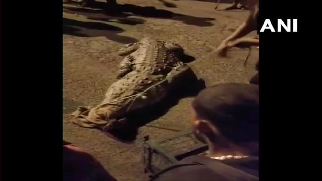 The image shows the rescued crocodile.(Twitter/ANI)