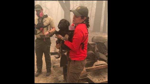 The post has been shared with several pictures of officials tending to the puppy.(Facebook/@Butte County Sheriff)