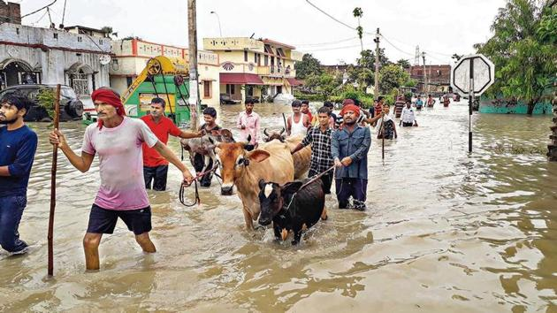 People with their cattle wade through the floodwater as they move to a safer place, in Gopalganj district, Friday, July 24, 2020.(PTi file photo)