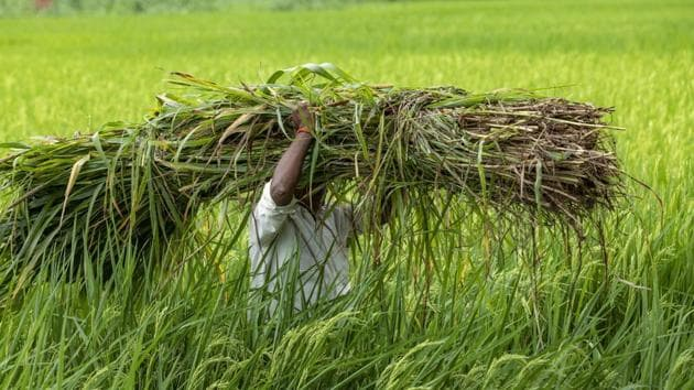 Farmers across the country are protesting against three new farm bills which they say are against the interest of farmers.(AP)