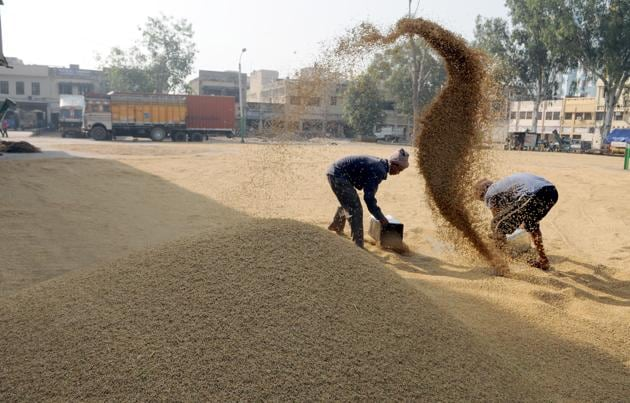Farmers drying paddy crop.(HT FILES)
