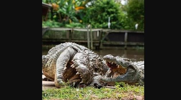 """""""And then I said, 'In a while, Crocodile!',"""" joked an individual on Instagram.(Instagram/@gatorland_orlando)"""