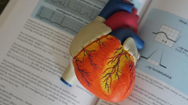 Researchers have led an international study identifying the cardiac cells responsible for repairing the damage to the heart after infarction.(Unsplash)