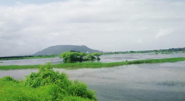 A mangrove hacked. The NCRB data for EPA, 1986 offences for Maharashtra showed 42 cases in 2019, as compared to 45 in 2018.(Sourced)