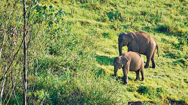 India is home to about 30,000 elephants.(Shutterstock)