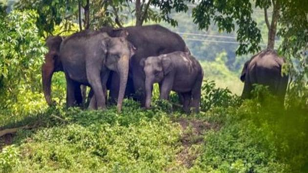 Man-elephant conflicts have risen over the years due to the shrinking habitat of the tuskers, argue some experts.(PTI Photo)