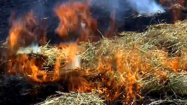 According to Haryana Space Applications Centre (HARSAC), until October 15, 1,835 active fire locations (AFL) were reported from the state against 1,072 during the same period last year.(ANI Photo)