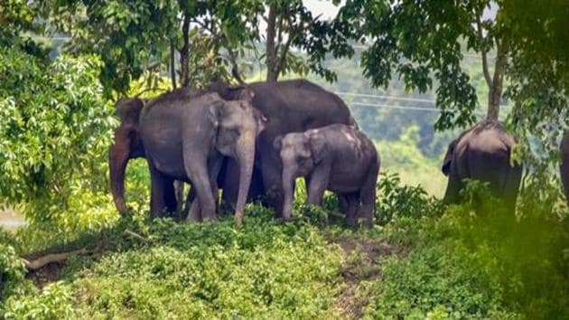Assam's Kaziranga national park to open for tourists from October 21: Know the guidelines | Latest News India - Hindustan Times