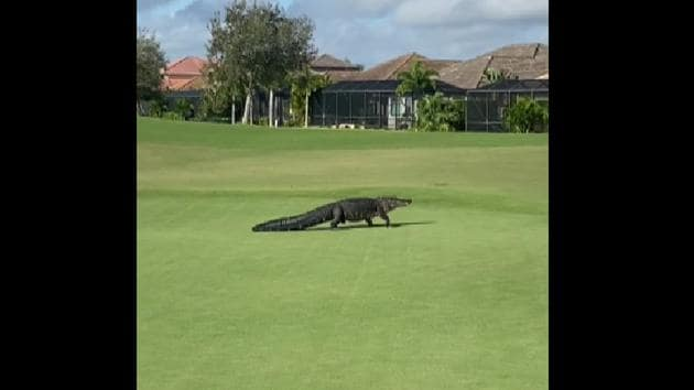 The image shows the alligator at the golf course.(Facebook/@Duran Golf Club)
