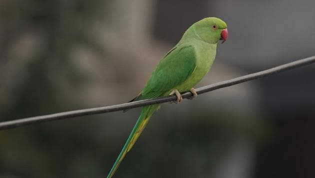 The parrot is named Eric (representative image).(Unsplash)