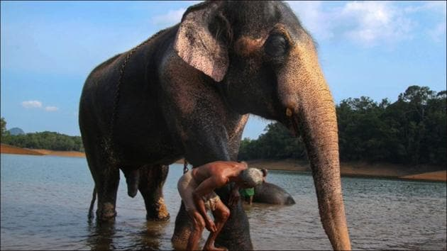 Kottoor elephant rehabilitation centre set to become largest care centre in the world(Twitter/bgmahesh)