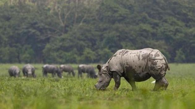 Pobitora has more than 100 rhinos, 2,000 wild buffaloes, thousands of hogs, barking deer, leopards, different species of snakes and tortoises.(AP file photo)