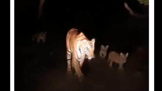 The image shows the mama tiger with her cubs.(Twitter@rameshpandeyifs)
