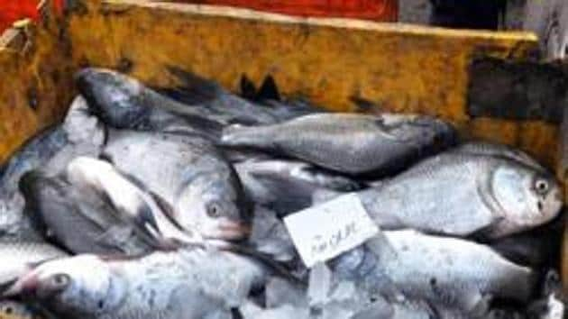 The fish would be given to the beneficiaries in powder form or in packets after being dried.(HT PHOTO)