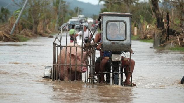 """A motorcycle carrying a pig crosses a flooded road in Albay province, central Philippines on November 12. President Rodrigo Duterte told Southeast Asian leaders the devastation of recent weeks was """"a stark reminder of the urgency of collective action to combat the effects of climate change,"""" Reuters reported. (John Michael Magdasoc / AP)"""