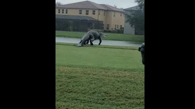 """I would be scared,"" a Facebook user commented on the video.(Facebook/@Valencia Golf and Country Club)"