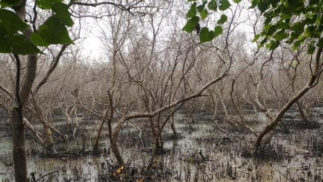 The mangrove area at Mahul-Wadala.(Photo: Vanashakti, SEAP)