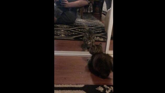The image shows a kitten.(Reddit/@nonoglorificus)