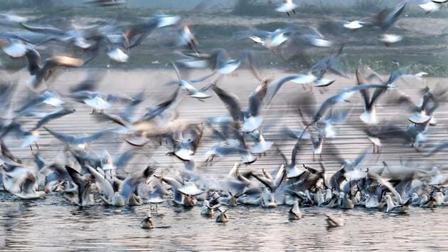 Migratory birds fly over a water body. (representative image)(PTI)