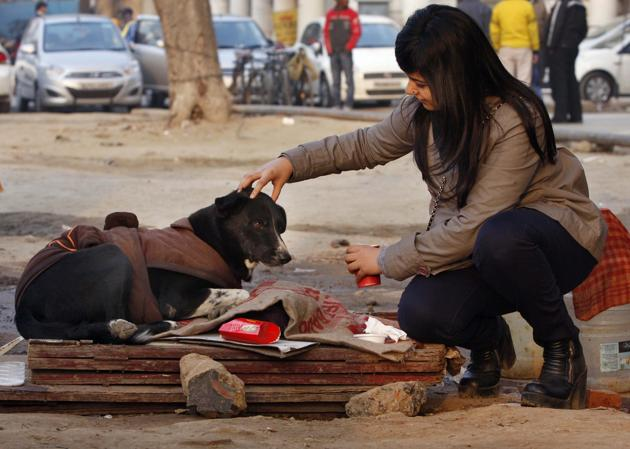 Strays find it difficult to bear the winter chill in Delhi, and this has encouraged some denizens to make and distribute temporary shelters for the voiceless.(Photo: Sushil Kumar/HT (Photo for representational purposes only))