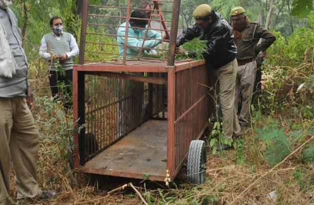 With the big cat staying untraceable, the Ghaziabad administration has cautioned people living in the neighbouring areas of Raj Nagar, Raj Kunj, Shastri Nagar and Kavi Nagar against venturing out in the open alone.(HT Photo)