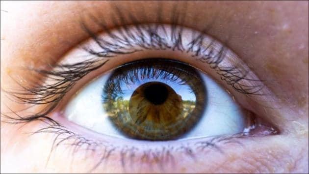 Scientists develop new gene therapy for eye disease(Twitter/HowieRegay)