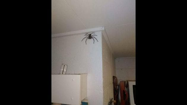 The image shows the spider on the wall.(Facebook/@‎Jake Gray)