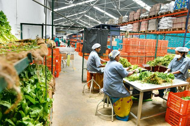Big Basket CEO Hari Menon said the company lost 80% workers in the first two days of lockdown.(Mint Archives)