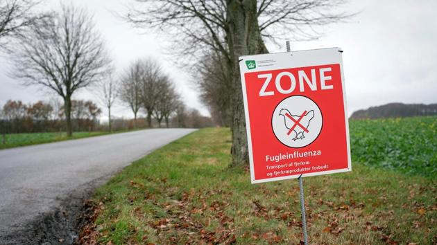 A sign warns about the avian influenza in an area of Randers, Denmark. Now, Avian flu has been confirmed at a commercial turkey fattening farm near Northallerton, North Yorkshire in northern England.(Reuters)