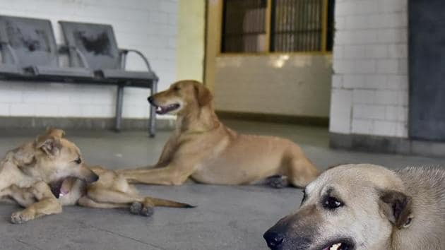 Dogs were seen entering the hospital premises and creating a menace in the hospital in Sambal.(Gurpreet Singh/Hindustan Times/For representative purposes only)