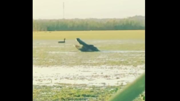 The image shows the alligator.(Facebook/@Cass Couey)