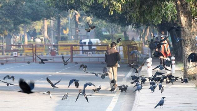 People walk past crows gathered at a sunlit spot on a cold day near Rajpath in New Delhi on November 29. The mean minimum temperature was 15 degrees Celsius last year, 13.4 degrees Celsius in 2018 and 12.8 degrees Celsius in 2017 and 2016, HT reported. (Arvind Yadav / HT Photo)