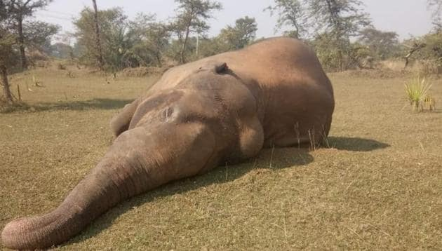 The elephant was found dead after electrocution in Dhenkanal district on Tuesday, said the forest officials.(Sourced)