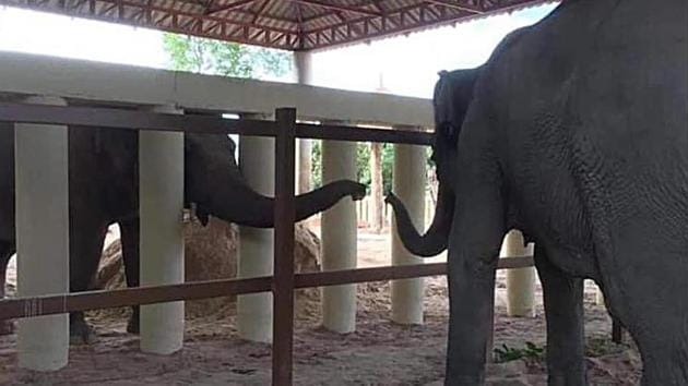 Kaavan extends his trunk from behind white posts to greet a fellow inhabitant of the Cambodian sanctuary where he is beginning his new life, on December 1. It was his first contact with another elephant in eight years. (Four Paws via AP)