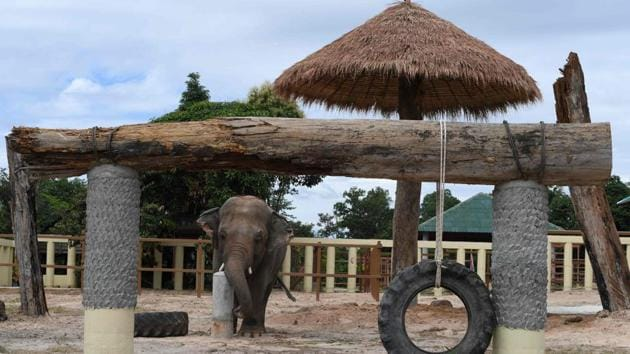 "Kaavan, a 36-year-old bull elephant, who was flown from Pakistan, explores his new enclosure at the Kulen Prom Tep Wildlife Sanctuary in Cambodia's Oddar Meanchey province on December 1. Dubbed the ""world's loneliest,"" Kaavan was the sole Asian elephant at Islamabad's dilapidated zoo. Kaavan's move is the culmination of years of campaigning from animal rights groups. (Tang Chhin Sothy / AFP)"