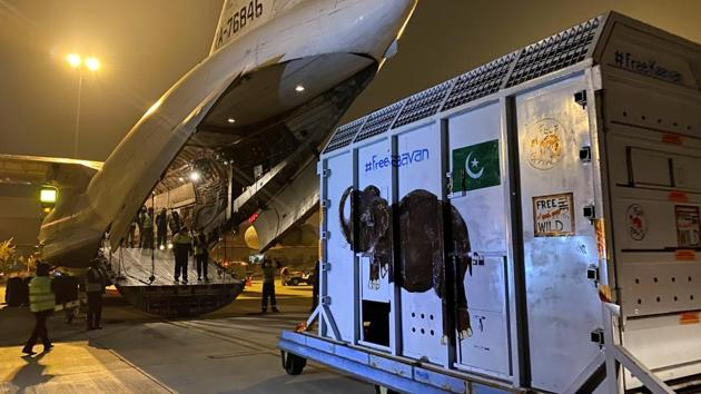 A crate carrying Kaavan is seen at the Islamabad International Airport in Islamabad, Pakistan on November 30. Like other travellers during these times, Kaavan needed to be tested for Covid-19 before his flight. Once his large metal crate was safely on board, Kaavan was provided with in-flight snacks — 200 kilograms of them — for the seven-hour journey. (Saiyna Bashir / REUTERS)
